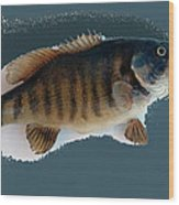 Fish Mount Set 10 B Wood Print