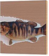 Fish Mount Set 11 B Wood Print