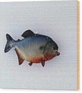 Fish Mount Set 12 A Wood Print