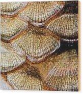 Fish Scales Wood Print by Odon Czintos