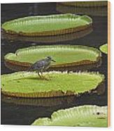 Fisher Bird On Giant Lily Pad In Pond Wood Print
