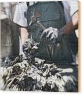 Fisherman Separating Clumps Of Oysters Wood Print