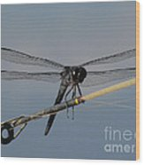 Fishing Bubby Wood Print