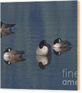 Five Geese Napping Wood Print