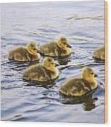 Five Goslings In The Water Wood Print