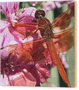 Flame Skimmer Dragonfly Wood Print