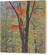 Flaming Fall Foliage Wood Print