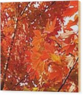 Flaming Maples Wood Print