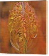 Flaming Sumac Wood Print