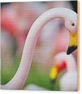 Flamingo 5 Wood Print