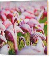 Flamingo 7 Wood Print