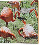 Flamingo Face-off Wood Print
