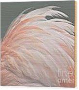 Flamingo Feather Details Wood Print