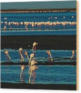 Flamingo Gathering Wood Print