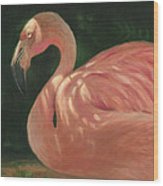 Flamingo In Dappled Light Wood Print