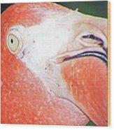 Flamingo Nose Wood Print