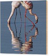 Flamingo Reflection Wood Print