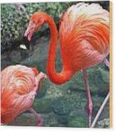 Flamingo River Walk Wood Print