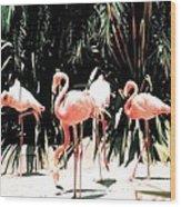 Flamingo Struts Wood Print