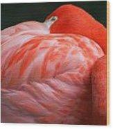 Flamingo Taking A Snooze Wood Print