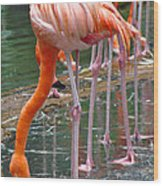 Flamingo Toe Touch Wood Print