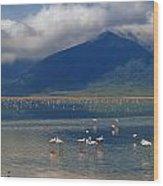 Flamingoes In Crater Lake At Ngorongoro Wood Print