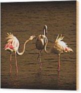 Flamingos Argue Wood Print
