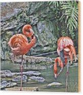 Flamingos Img 2897 Wood Print