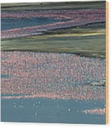 Flamingos Of Lake Nakuru Wood Print