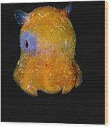 Flapjack Octopus Wood Print