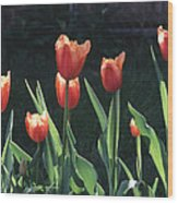 Flared Red Yellow Tulips Wood Print