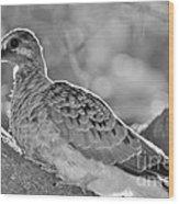 Fledgeling In Oak Tree Bw Wood Print by Lynda Dawson-Youngclaus