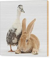 Flemish Giant Rabbit And Call Duck Wood Print