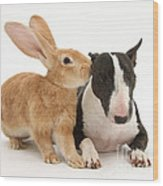 Flemish Giant Rabbit And Miniature Bull Wood Print