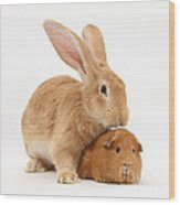 Flemish Giant Rabbit With Red Guinea Pig Wood Print