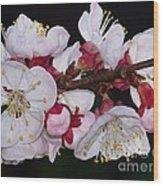 Fleurs D'abricotier Wood Print