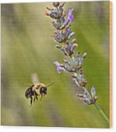 Flight Of The Bumble Wood Print