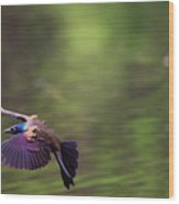 Flight Of The Grackle Wood Print