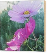 Flirty Cosmos Wood Print by Judyann Matthews