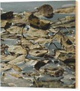 Floating Leaves Wood Print