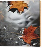 Floating Maple Leaves Wood Print