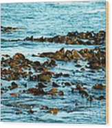 Floating Seaweed Wood Print