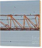 Flock Of Birds Perching On Construction Crane Wood Print