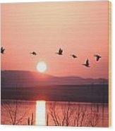Flock Of Canada Geese Flying Wood Print by Ira Block