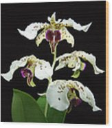 Flock Of Dendrobium Wood Print