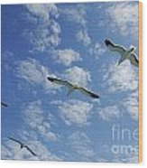 Flock Of Five Seagulls Flying In The Sky Wood Print by Sami Sarkis