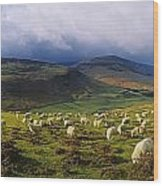 Flock Of Sheep Grazing In A Field Wood Print