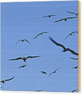 Flocking Frigatebirds Riding Wood Print