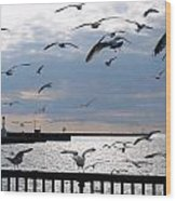 Flocking Gulls Wood Print
