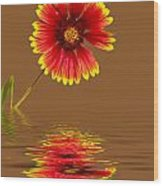 Flooded Beach Flower Wood Print